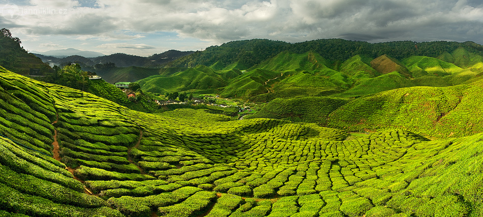 Cameron highlands, Malajsie