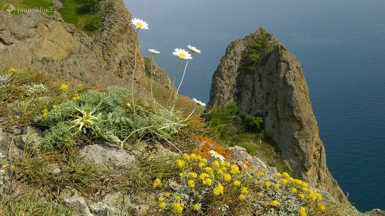 třešňový květ zdarma online seznamky